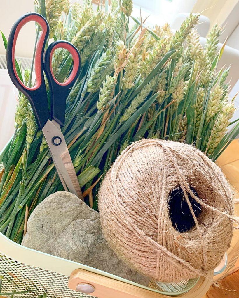 Respectfully collected corn ready for making Lammas Corn Dolls