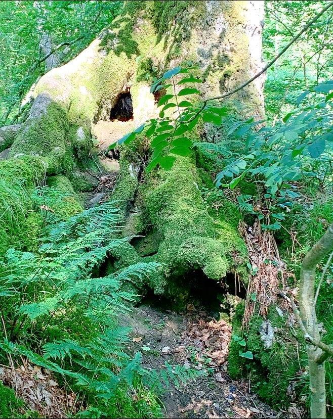 Fairy Doors on the Hareshaw Burn Trail up to Hareshaw Linn Waterfall