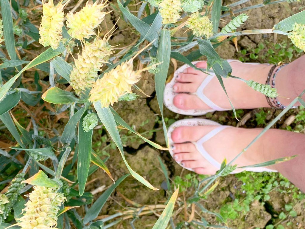 Grounding amongst and offering respect to the crops gifted to u by the Earth Goddess, our matured May Queen.