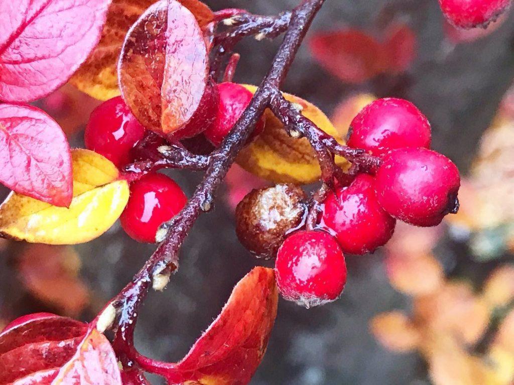 Mabon, Autumn Equinox, Fall Equinox, Pagan wheel of the Year, Pagan Sabbat,
